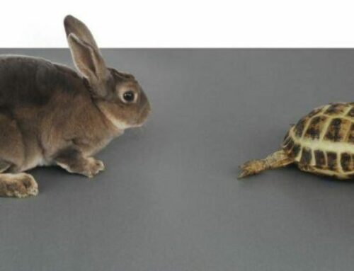 PFI Handback  – Tortoise and the Hare